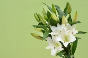 white-lilly-flower-background_25595-376