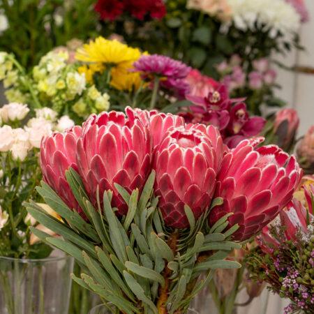 Protea Bunch